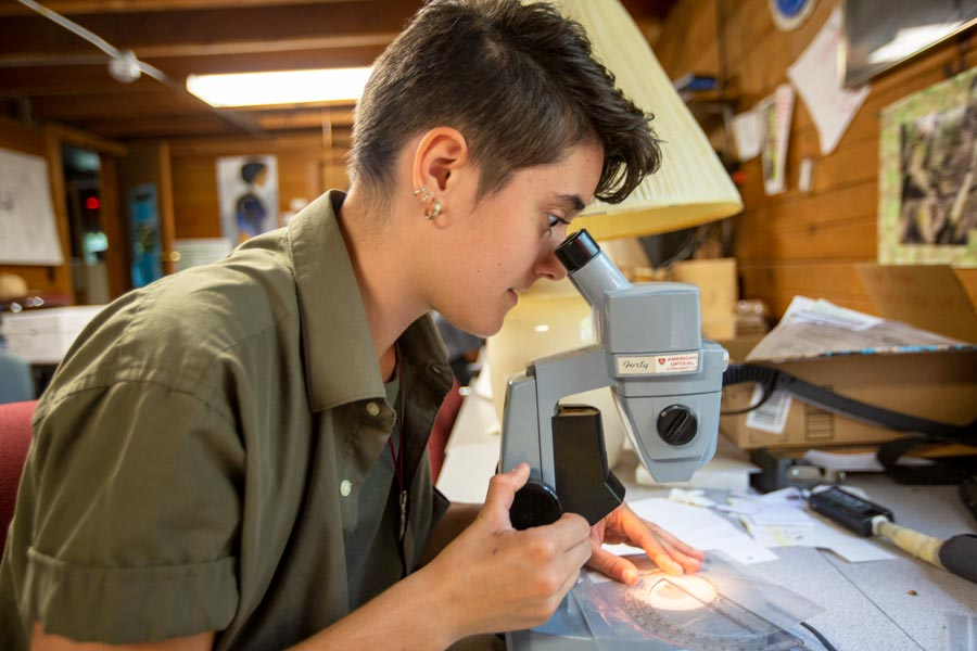 Andie Carlson-Dakes '20 examines bees under the microscope in the lab at Green Oaks.