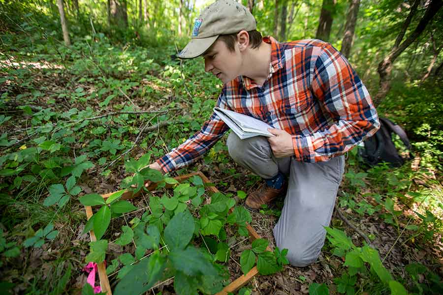 Senior Ben Dolezal studied shrubs and trees for his Green Oaks project on invasive plant species.