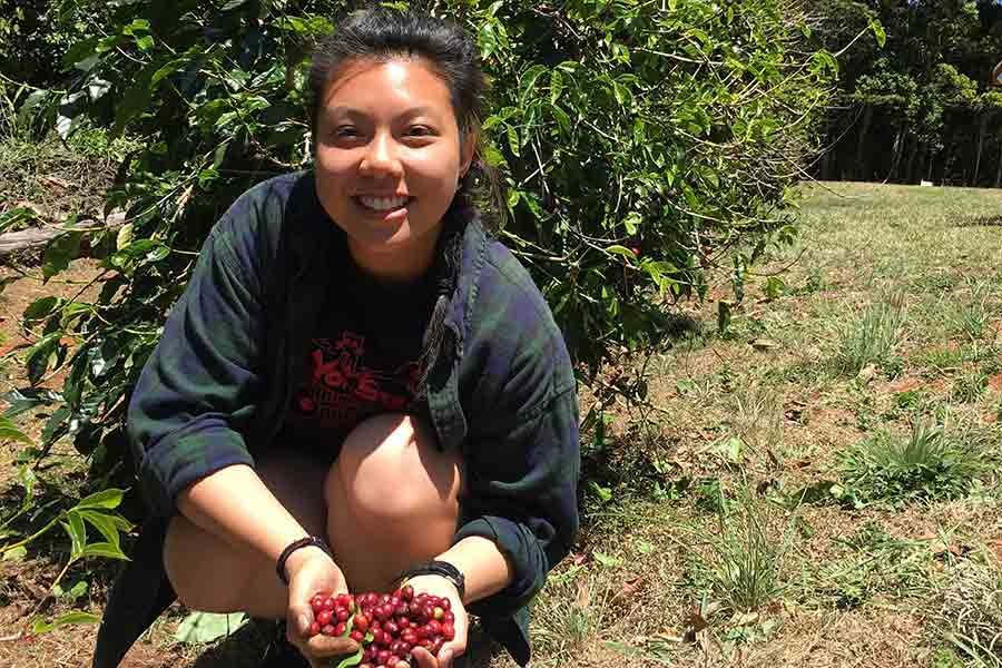 Jenny Lau picking coffee cherry in Wondecla, Australia.