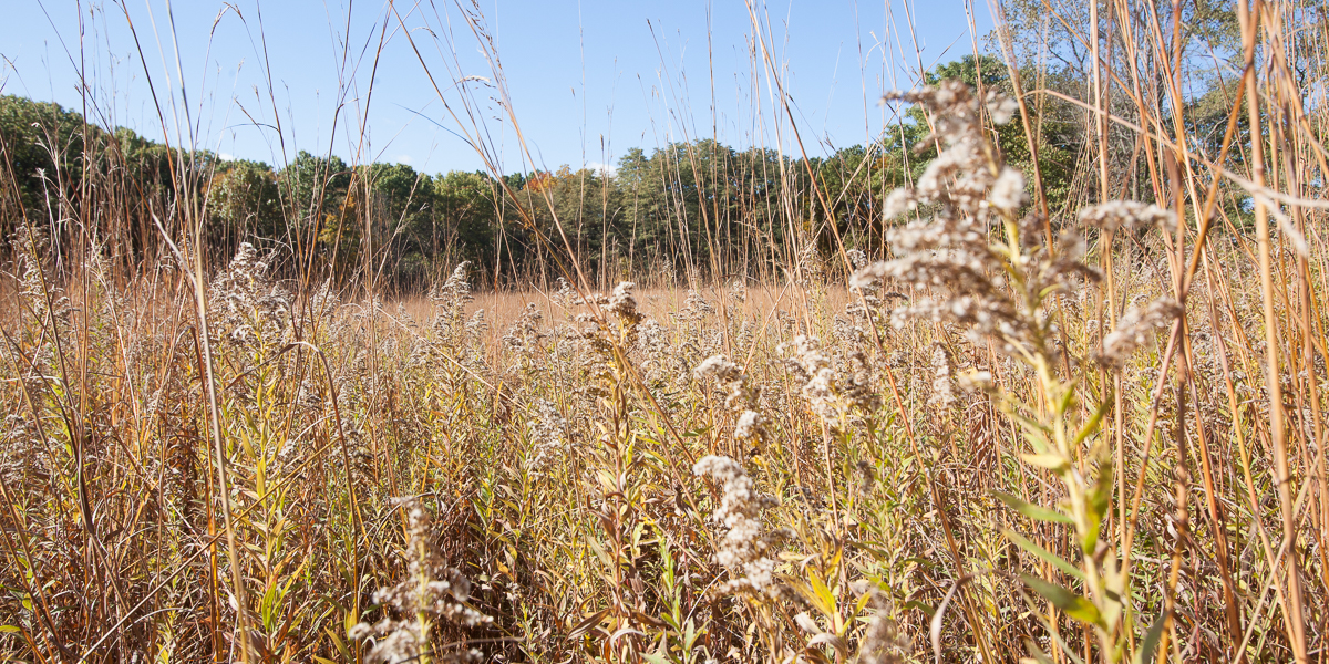 The prairie at Green Oaks Biological Field Station.