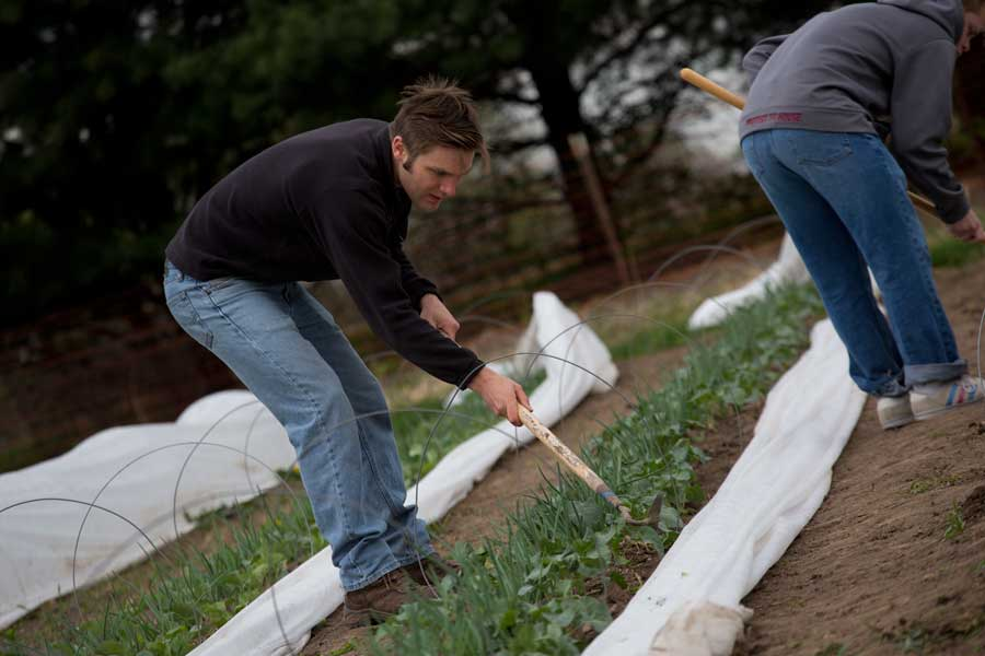 Marc Spehlmann '15 works on a farm as part of his StartUp Term project to create a new company.