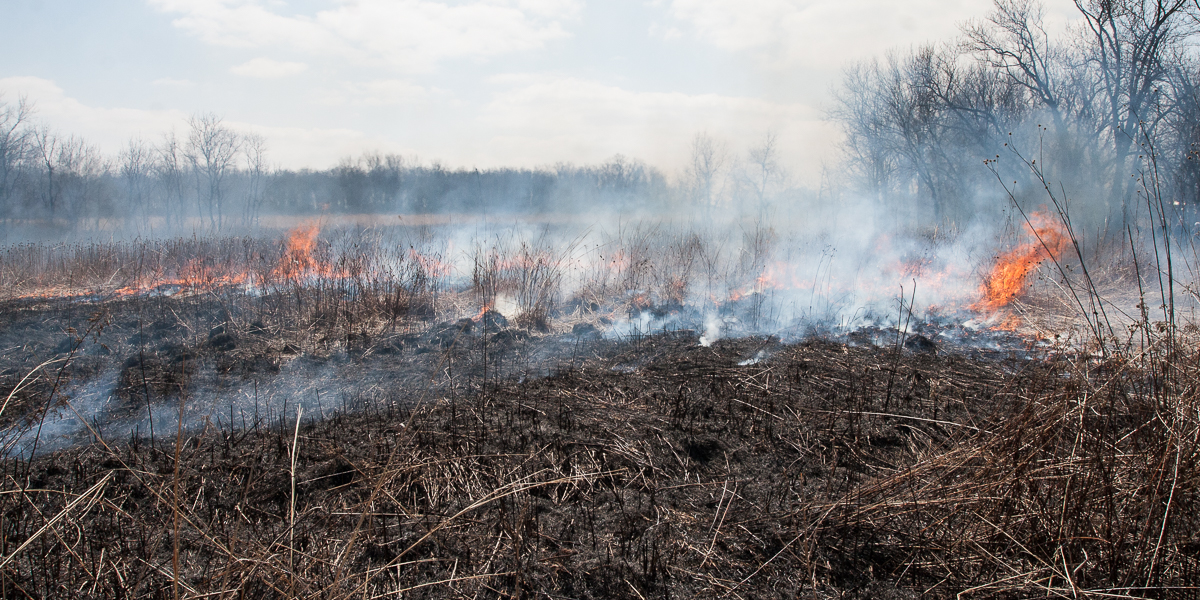 The prairie on fire during the annual Green Oaks Prairie Burn.