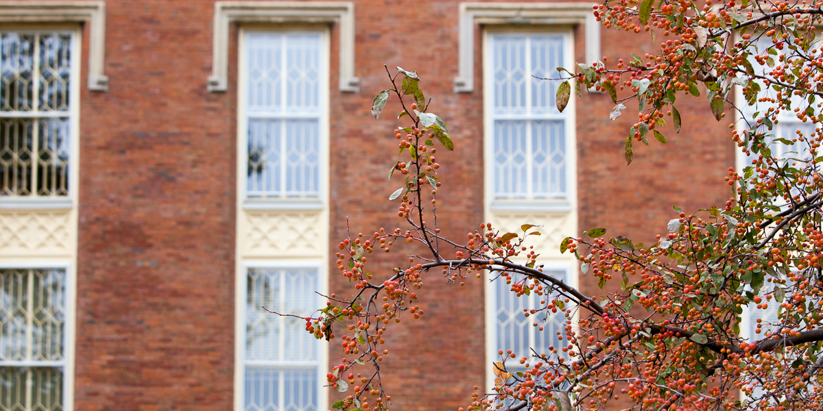 The windows of Old Main.