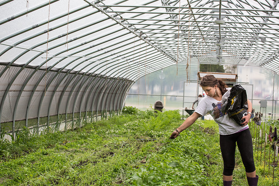 Environmental Studies: Urban Agriculture