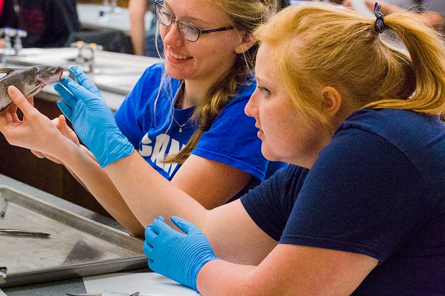 Student in Biology of Fishes (BIO 321) examining, measuring, drawing, dissecting specimens in a lab session with faculty Nick Gidmark. Emily Hagerott and Natalie Haddad.